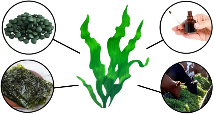 Применение водорослей