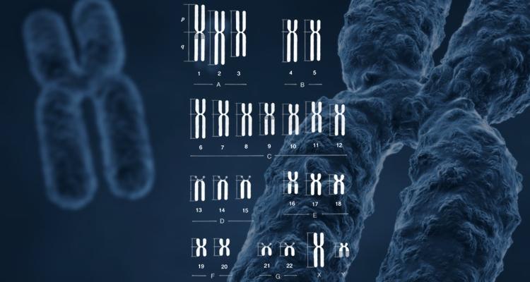 Хромосомы набор человека